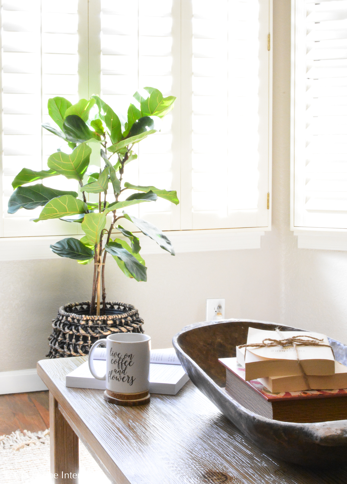 Tips to keep your Fiddle Leaf Fig Tree alive