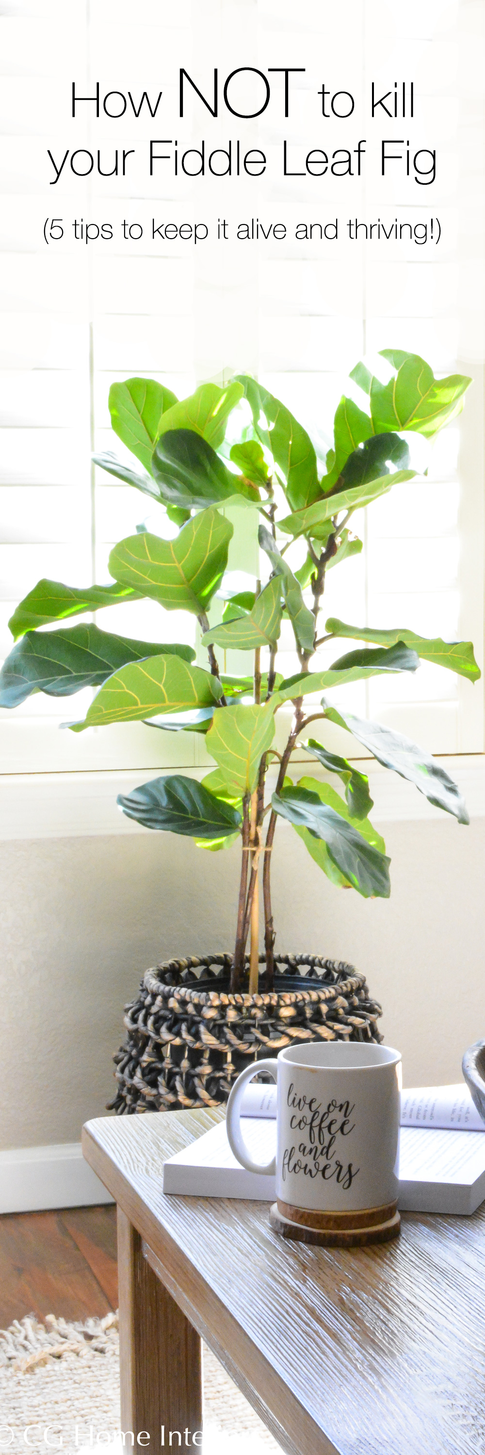 5 ways to keep your fiddle leaf fig tree alive